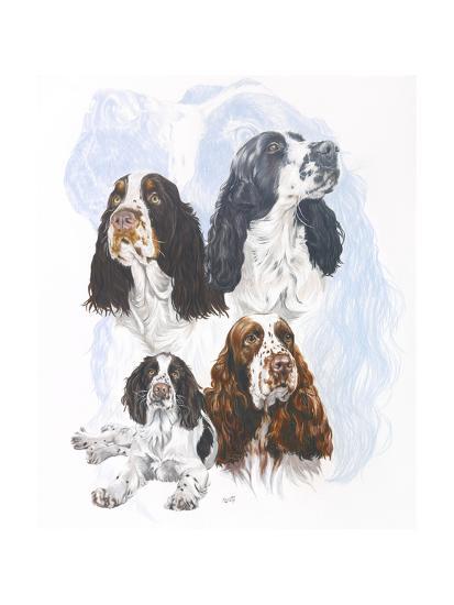 Springer Spaniel-Barbara Keith-Giclee Print