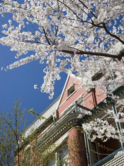 Springtime Flowering Tree against Old Brick Home and Blue Sky-David Evans-Photographic Print