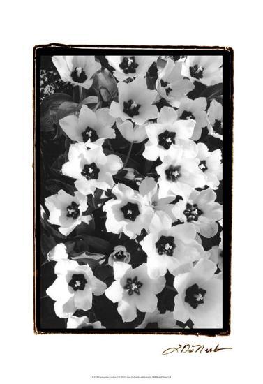 Springtime Garden II-Laura Denardo-Art Print
