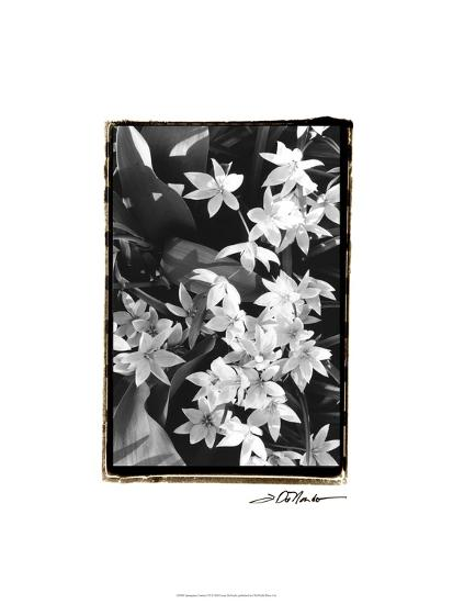 Springtime Garden VII-Laura Denardo-Art Print
