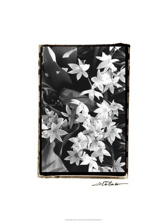 https://imgc.artprintimages.com/img/print/springtime-garden-vii_u-l-pfry8h0.jpg?p=0