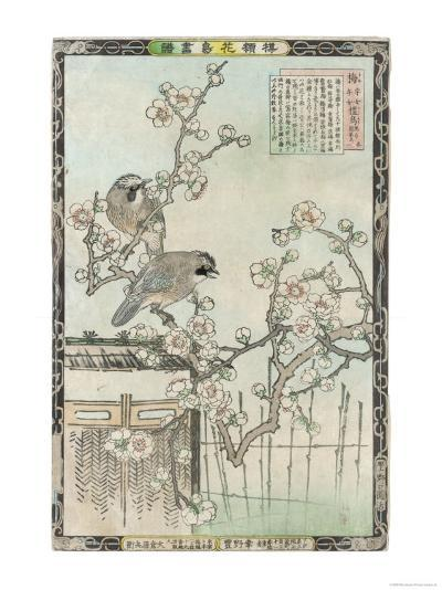 Springtime in Japan, Cherry Blossom and a Pair of Birds--Giclee Print