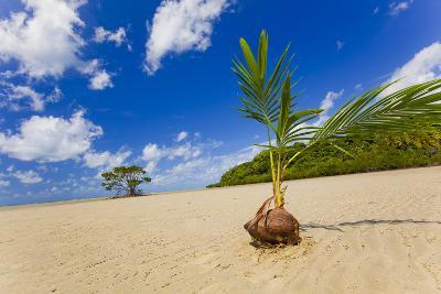 Sprouting Coconut-EvanTravels-Photographic Print