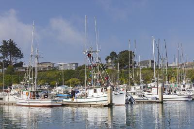 Spud Point Marina, Bodega Bay, California, Usa-Rainer Mirau-Photographic Print