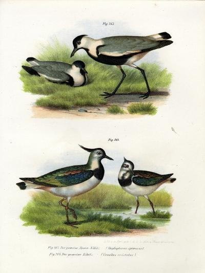 Spur-Winged Lapwing, 1864--Giclee Print