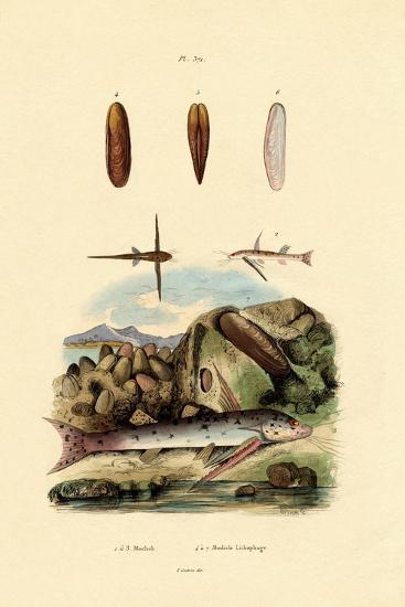 Squeaker, 1833-39--Giclee Print