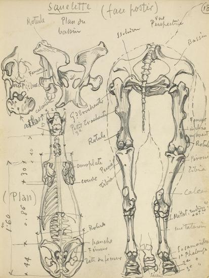 Squelette de cheval-Eug?ne Samuel Grasset-Giclee Print