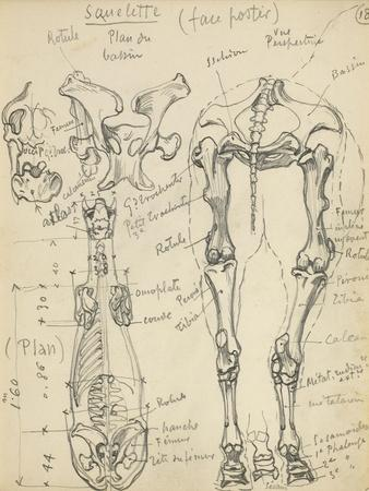 https://imgc.artprintimages.com/img/print/squelette-de-cheval_u-l-pbgyms0.jpg?p=0