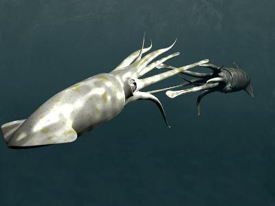 Squid Mating-Christian Darkin-Photographic Print