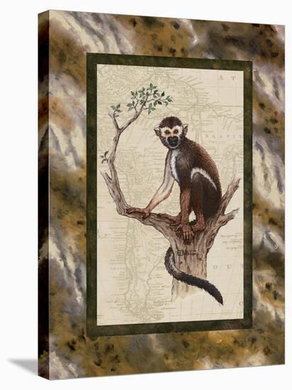 Squirrel Monkey-Janet Kruskamp-Stretched Canvas Print