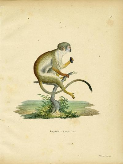 Squirrel Monkey--Giclee Print