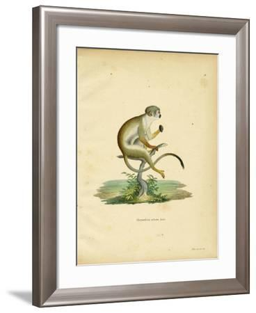 Squirrel Monkey--Framed Giclee Print