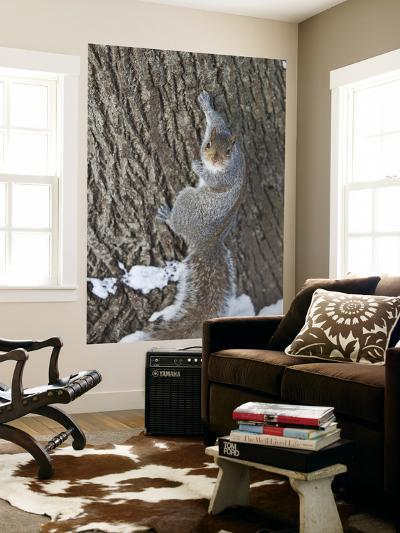 Squirrel on Tree Trunk in Central Park-Richard l'Anson-Giant Art Print