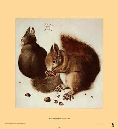 https://imgc.artprintimages.com/img/print/squirrels_u-l-e81cp0.jpg?p=0