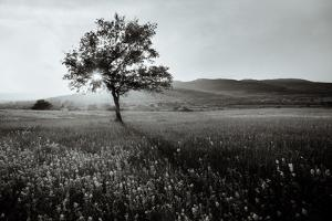 Abstract Black and White Landscape with Lonely Tree by SSokolov