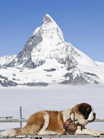 St. Bernard Dog and Matterhorn From Atop Gornergrat, Switzerland, Europe-Michael DeFreitas-Photographic Print