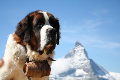 St. Bernard Rescue Dog in Zermatt, Switzerland, with Mount Matterhorn in the Background- EmmepiPhoto-Photographic Print