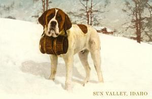 St. Bernard with Keg in Snow, Sun Valley, Idaho
