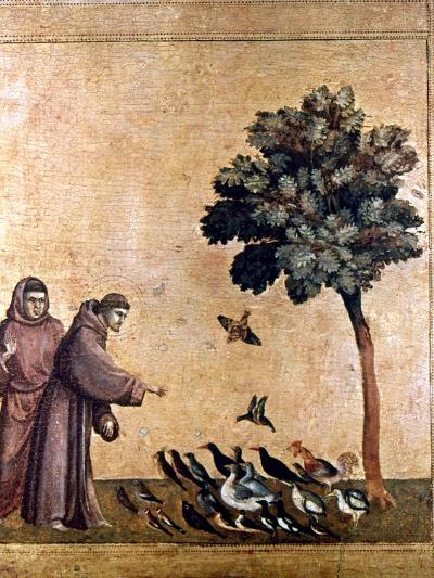 St. Francis Of Assisi--Giclee Print
