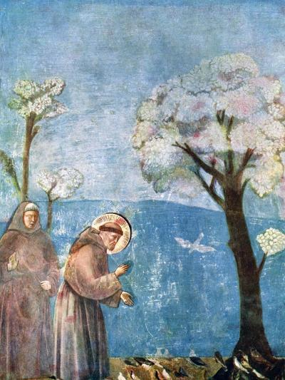 St Francis Preaching to the Birds, 1297-1299, (C1900-192)-Giotto-Giclee Print