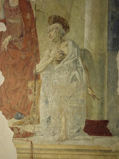 St Jerome, Attributed to Andrea Del Verrocchio Collaborators--Giclee Print