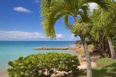 St. Johns, Antigua, Leeward Islands, West Indies, Caribbean, Central America-Frank Fell-Photographic Print
