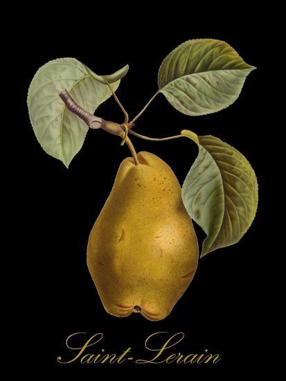 St. Lerain Pear-Mindy Sommers-Giclee Print
