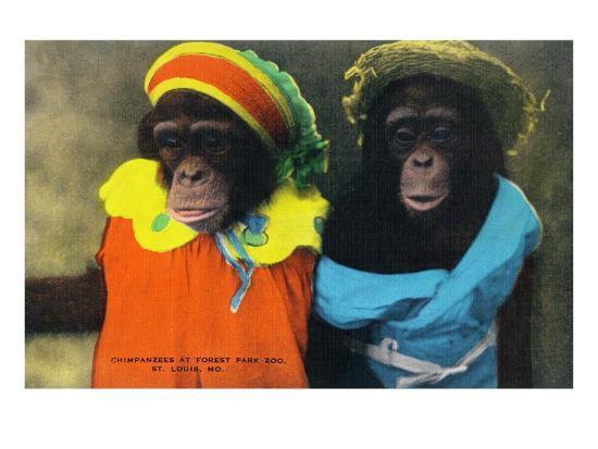 St. Louis, Missouri - Forest Park Zoo Chimpanzees in Costume-Lantern Press-Art Print