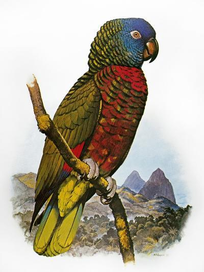 St Lucia Amazon Parrot-William T^ Cooper-Giclee Print