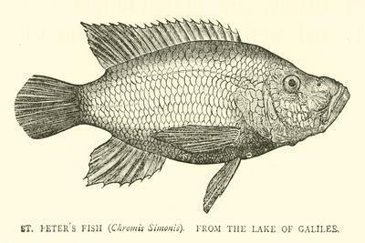 https://imgc.artprintimages.com/img/print/st-peter-s-fish_u-l-pp5ep40.jpg?p=0