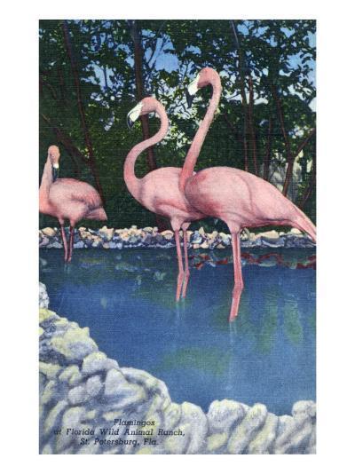 St. Petersburg, Florida, View of Pink Flamingos at Florida Wild Animal Ranch-Lantern Press-Art Print