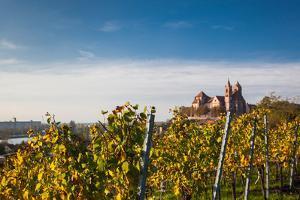 St. Stephansmunster cathedral from vineyard, Breisach, Black Forest, Baden-Wurttemberg, Germany