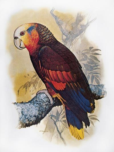 St Vincent Amazon Parrot-William T^ Cooper-Giclee Print