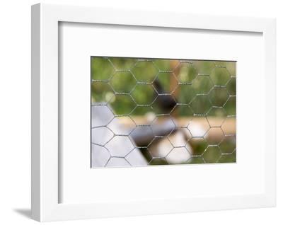 Stable, wire mesh fence, close up-Christine Meder stage-art.de-Framed Photographic Print