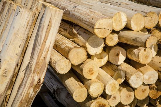 Stack of wood-Mark Lord-Photo