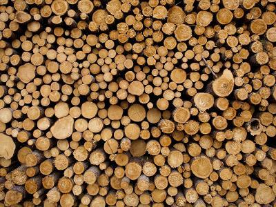 Stacked Piles of Cut Logs at Zellar Forest Products, Gulliver, Michigan, Usa-Paul Souders-Photographic Print