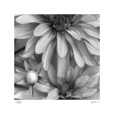 Botanical Study 10