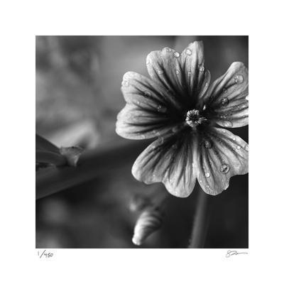 Botanical Study 19