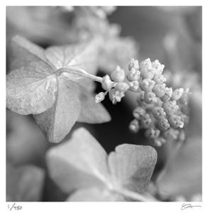 Botanical Study 2 by Stacy Bass