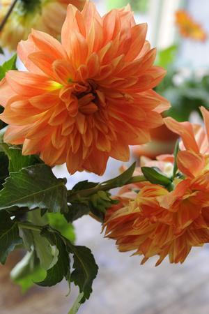 Bright orange flowers on display on kitchen table