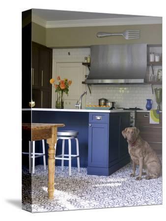 Dog in Modern Kitchen with Blue Island Unit, Usa