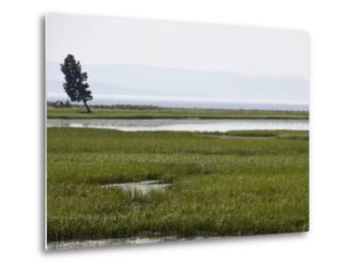 A Lone Tree Stands in Grassy Wetlands Surrounding Yellowstone Lake