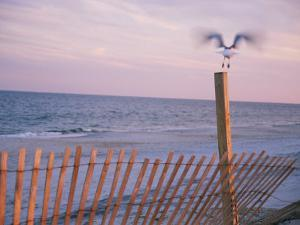 A Sea Gull Takes off from a Wooden Fence by Stacy Gold