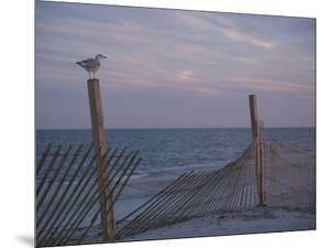 A Seagull Pauses Momentarily on a Wooden Fence Used for Dune Control by Stacy Gold