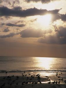 Evening Beach Scene in Florida by Stacy Gold
