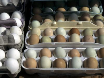 Fresh Farm Eggs are on Display at a Farmers Market in Madison, Wisconsin, United States by Stacy Gold