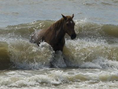 Horse Rides the Waves in the Atlantic Ocean by Stacy Gold