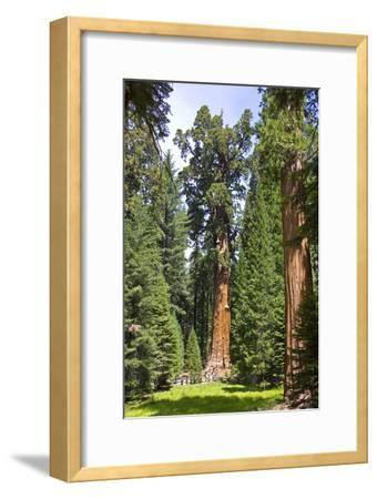 View of the Largest Tree in the World, Named General Sherman