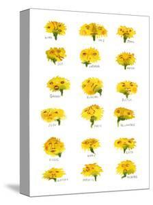 Herd of Dandelions by Stacy Milrany