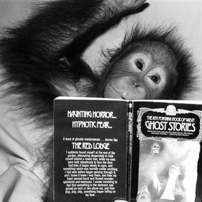 An Orangutan reading ghost stories by Staff